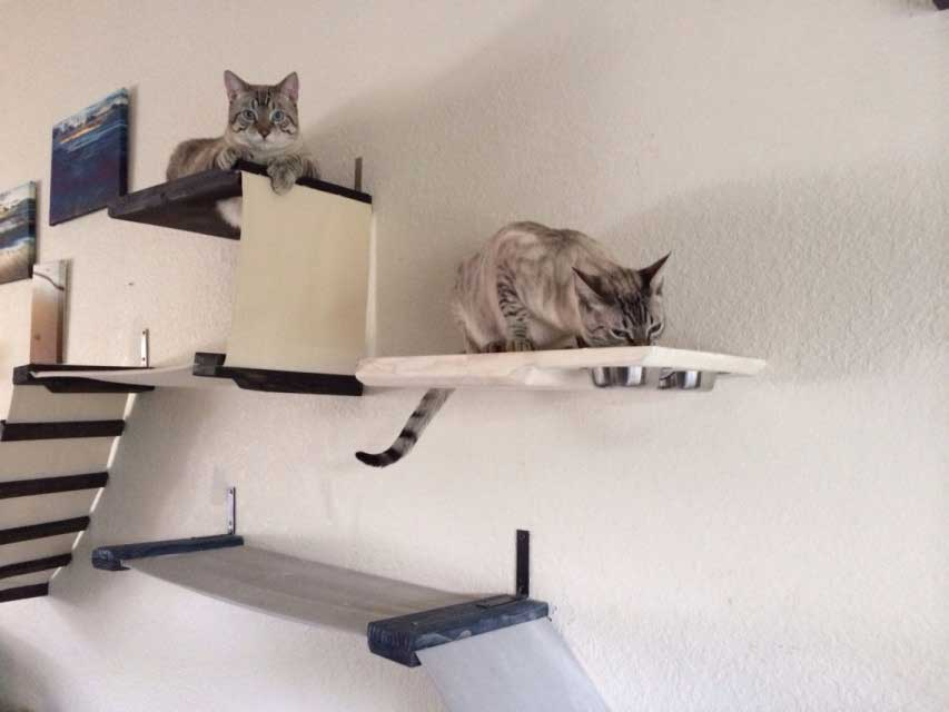 Shelf For Cat Food Elevated